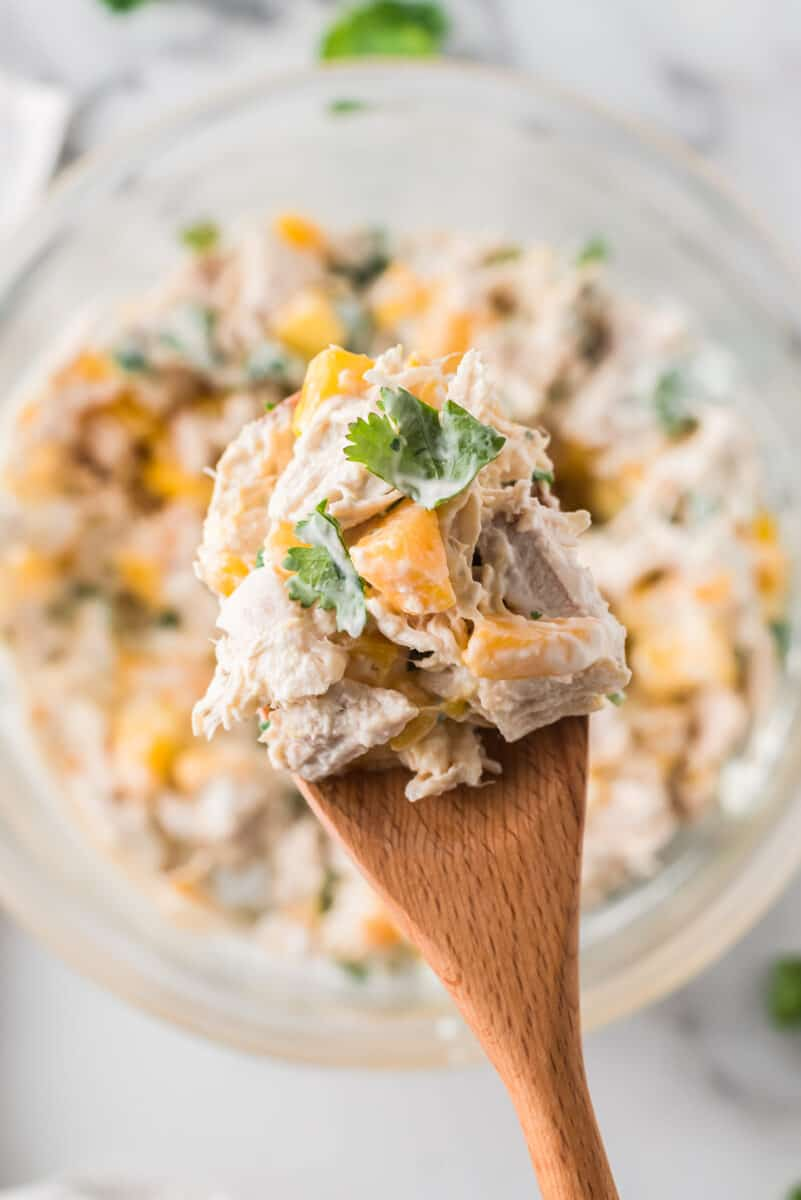 spoon holding up mango chicken salad